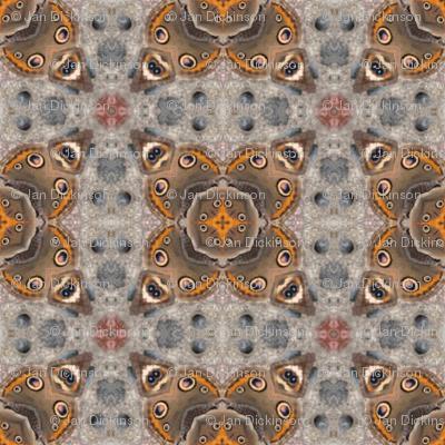 buckeye butterfly kalei I