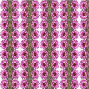 cactusrose0002