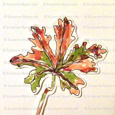 Mineral Point Wild Geraniums