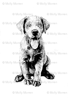 Puppy1_mollymorren_preview