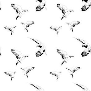 Birds in Paris - Black