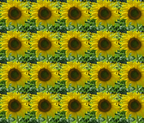 Pope_Farm_Sunflowers fabric by suzanne_myers_otto on Spoonflower - custom fabric
