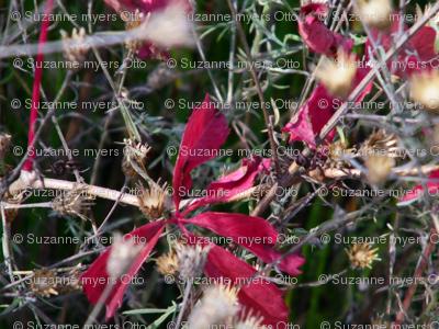 Schoenberg_Marsh_Plant_Life