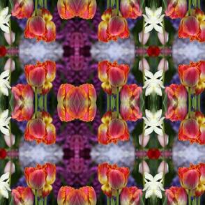 Tulip Wonderland