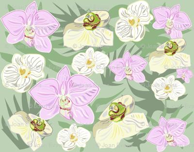 orchidmixpatt