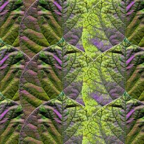 Redbud Leaf Stripe chartreuse