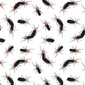 Florida Lovebugs