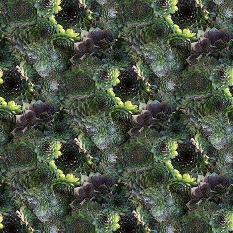 Sempervivum fabric by arts_and_herbs on Spoonflower - custom fabric