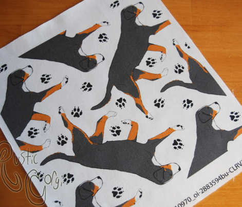 Trotting Greater Swiss Mountain Dog and paw prints - white
