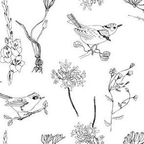 Birds white