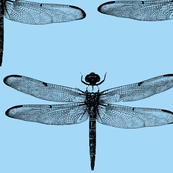 Dragonfly - Blue Background