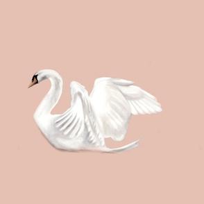 large swan on blush background