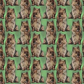 Posing Australian Terriers - green