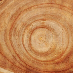 Tree Rings // Large