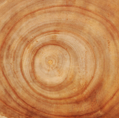Tree Rings - Large