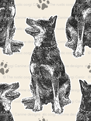 Small sitting Australian cattle dog - paw print sepia