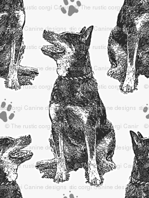 Small sitting Australian cattle dog - paw print gray