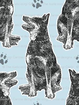 Small sitting Australian cattle dog - paw print blue