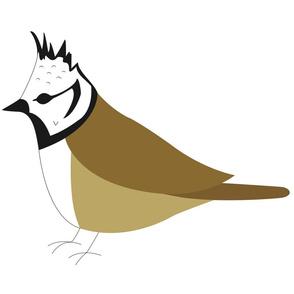 Crested Tit Bird / Lophophanes Cristatus
