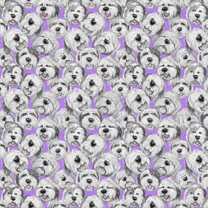 OES_heads_lavender