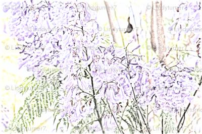 Jacaranda Drawing 2