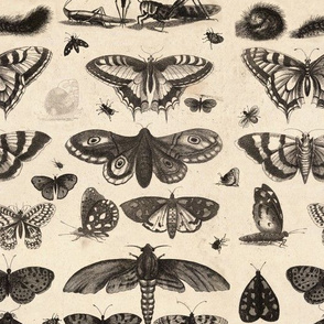 Antique Insect Fabric, Entomologist's Delight