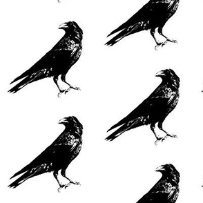 Crows // Large