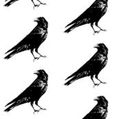 Black Crows // Large