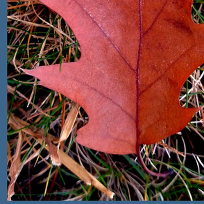 composite_oak_leaves_for_spoonflower