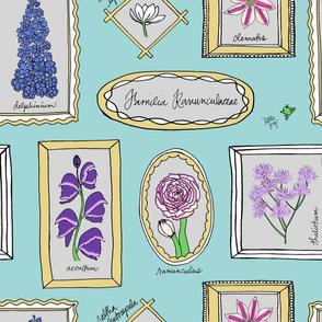 Familia Ranunculaceae