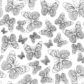 Butterfly Sketch - Small