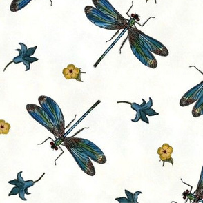 Blue Dragonflies on White