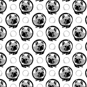 Collared French Bulldog portraits - gray