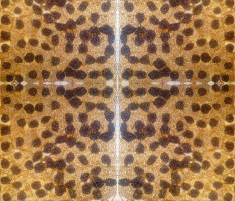 #FurFree Cheetah fabric by dog_faced_liar on Spoonflower - custom fabric