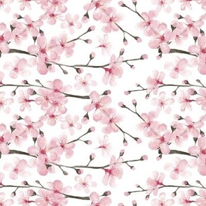 cherry blossom watercolor  // cherry blossom floral