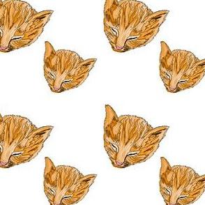 Peaches n Cream Kitty