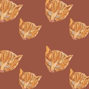 Brown Peaches n Cream Kitty