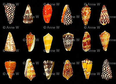 Watercolor cone shells