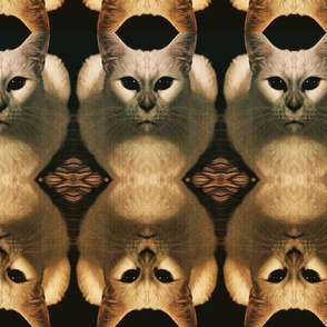 Cat portrait : Cat army