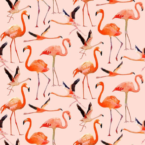 Lots of Flamingos!