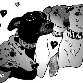 4 Amigos 50 Shades of Greyhound
