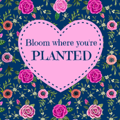 Spring Bloom where youre planted  Quote