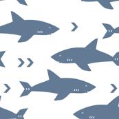 shark blue water ocean sealife marine animal