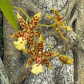 Cushion_Tropical_Yellow_Orchids_50x50cm_Leonie_Mac_Lean