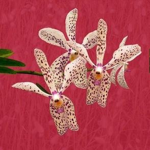 Cushion_Vanda_Spots_Orchid_45x45cm_Leonie_Mac_Lean
