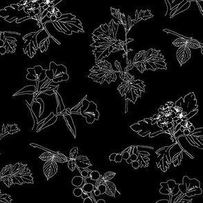 Botanical Sketchbook: Black & White