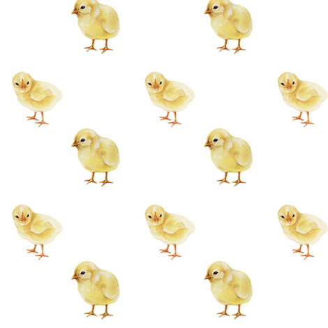 Baby Chicks on White fabric by thistleandfox on Spoonflower - custom fabric