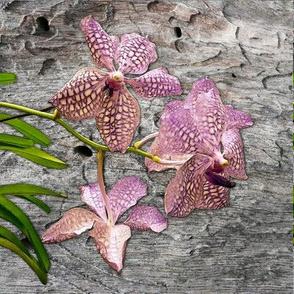 Purple_Vanda_Orchid_on_Wood_Cushion_45x45cm_Leonie_Mac_Lean