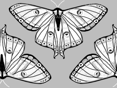moth // luna moth grey black and white spring moths lepidoptery butterfly butterflies