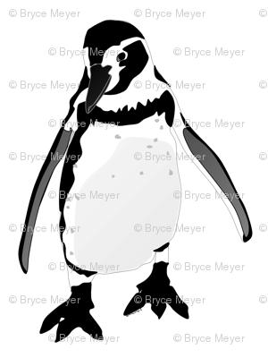 Smiling Humboldt Penguin